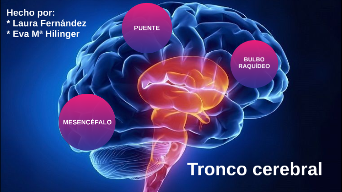 Tronco Cerebral By Laura Fernández Sánchez On Prezi Next