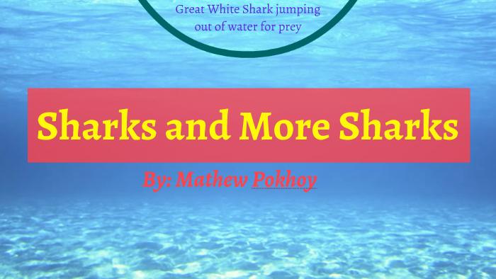 Shark Reputation by mathew pokhoy on Prezi