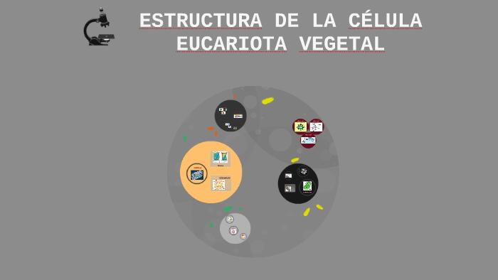 Estructura De La Célula Eucariota Vegetal By Gabriel
