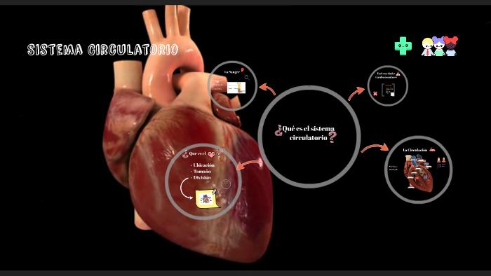 Circuito Circulatorio : Que es el sistema circulatorio by gordo hipopotamo on prezi