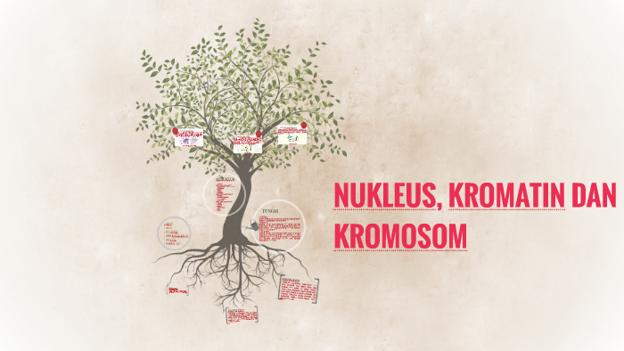 Dna Terletak Di Dalam Nukleus Dalam Bentuk Kromatin - DNA ...