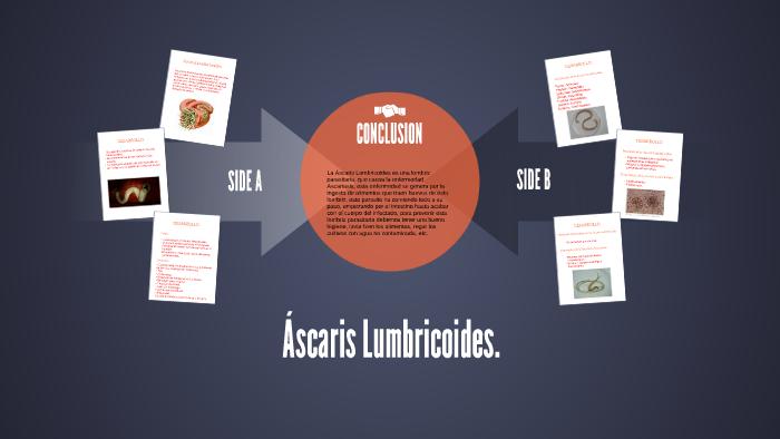 ascaris lumbricoides genero y especie