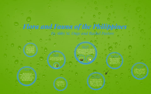 examples of flora and fauna in the philippines