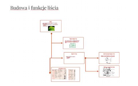 Budowa I Funkcje Liscia By Jakub Kierepa On Prezi