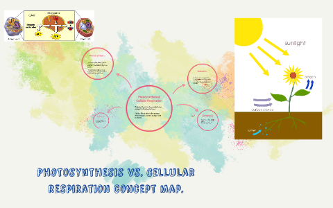 Photosynthesis Vs Celluar Respiration Concept Map By Najee Morris