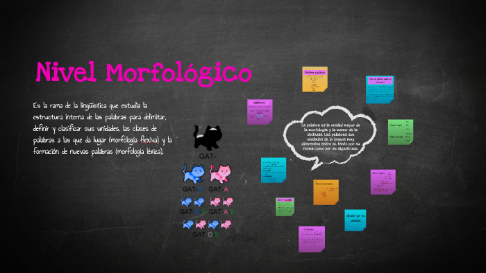 Nivel Morfologico By Maria Morillo On Prezi