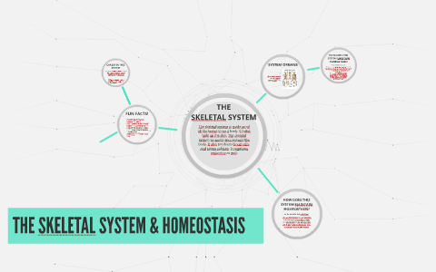 the importance of homeostasis in maintaining a healthy body