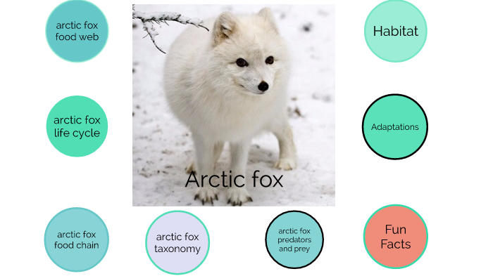 Arctic Fox Software Deutsch