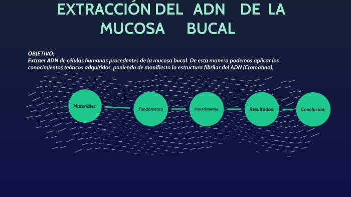 Extraccion Del Adn By Alejandra Mhfor On Prezi Next