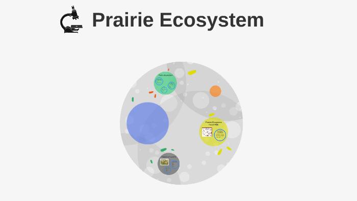 Prairie Ecosystem by lauren venditto on Prezi