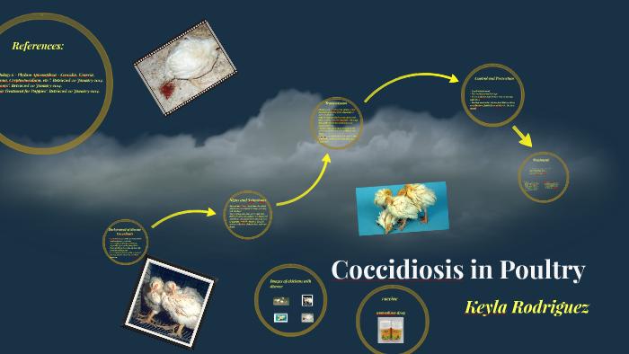 COCCIDIOSIS by dian ek on Prezi