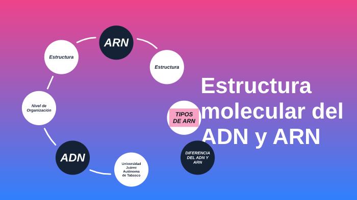 Estructura Molecular Del Adn Y Arn By Manlio Perez On Prezi Next