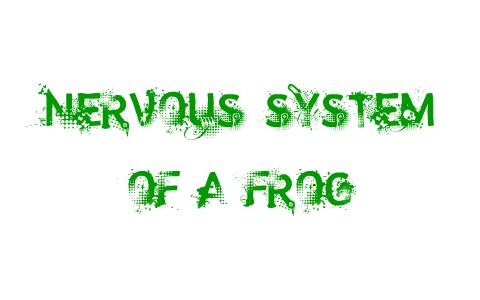 Nervous System Of A Frog By Alvin De Luna Der untere abschnitt wird als filum terminale externum bezeichnet. nervous system of a frog by alvin de luna
