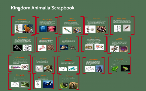 Image of: Animal Kingdom Az Animals Kingdom Animalia Scrapbook By Matt Smith On Prezi