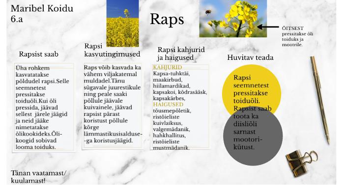 Rapsist