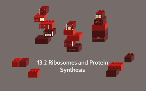 13.2 Ribosomes and Protein Synthesis by Cole Hardacre on Prezi