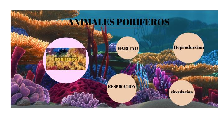 Poriferos By Shely Valentina Hernandez Martinez On Prezi Next