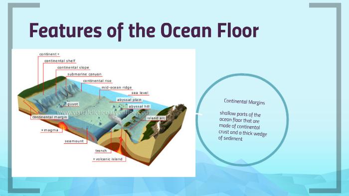 Ocean Floor by Emily Wyatt on Prezi