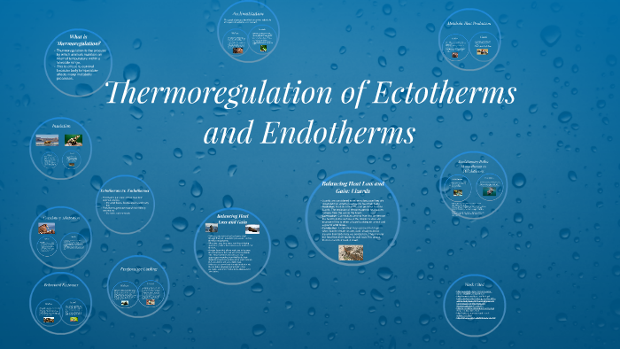endotherm ectotherm