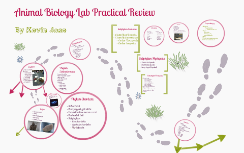 biology lab practical review