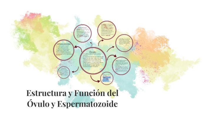 Estructura Y Funcion Del Ovulo Y Espermatozoide By Elena