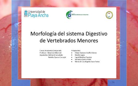 Morfología Del Sistema Digestivo De Vertebrados Menores By