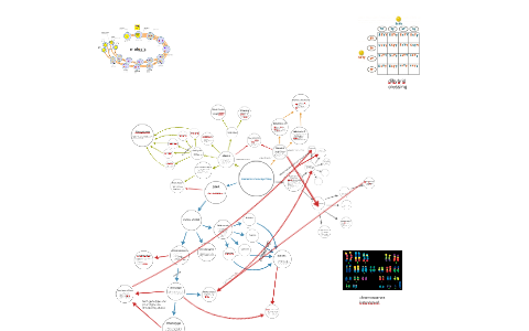 Genetics Concept Map By Manraj Khurana On Prezi