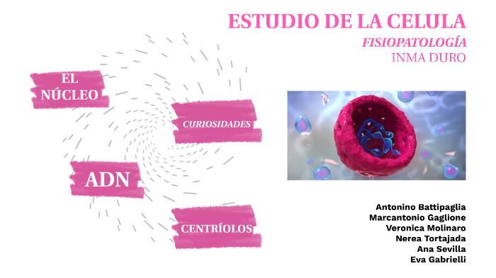 Fisiopatologia By Nerea Tortajada On Prezi Next