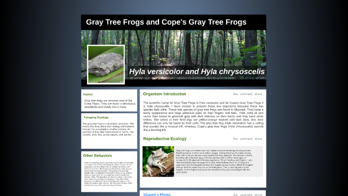 Gray Tree Frogs and Cope's Gray Tree Frogs by Amy Cuellar on Prezi