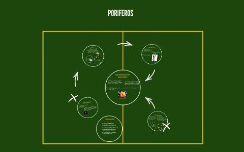 Poriferos By Prezi User On Prezi