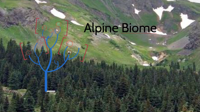 alpine biome