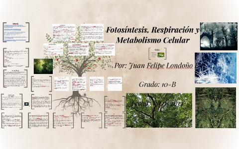tabla metabolismo basal Consejos y Guía