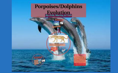 Dolphin/Porpoise Evolution by Erik Luna on Prezi