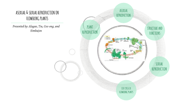 ASEXUAL AND SEXUAL REPRODUCTION by Kate Simbajon on Prezi Next
