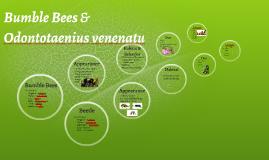 Odontotaenius venenatu Beetle and Bumble Bees