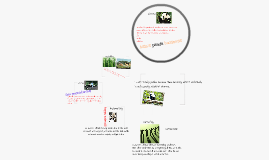 Copy of Asia's panda business