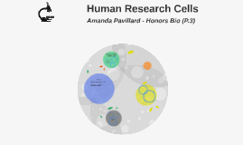 Human Research Cells