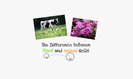Plant vs. Animal Cells
