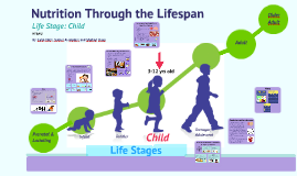 Nutrition Through the Lifespan