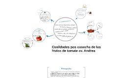 Cualidades pos cosecha de los frutos de tomate cv. Andrea