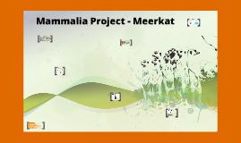 Mammalia Project- Meerkat