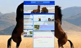 Copy of WILD HORSES!