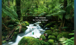 Copy of The Amazon