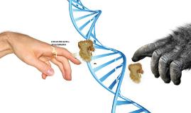 EVOLUCIONISMO vs CREACIONISMO