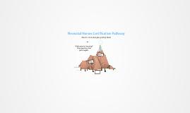 Neonatal Nurses Certification Pathway