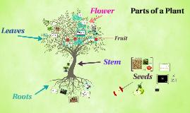 Copy of Parts of a Plant