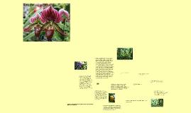 Amazonijos augmenija