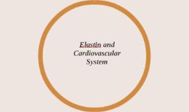 Elastin and Cardiovascular System