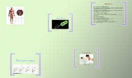 E. coli y H. sapiens sapiens