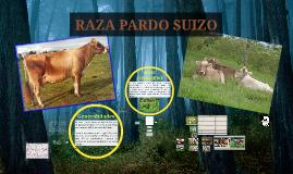 Pardo Suizo